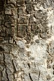 Aged Bark Wood Textured Background Royalty Free Stock Photography