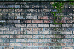 Aged Brick with Moss Texture Royalty Free Stock Images