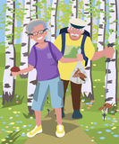 Aged couple hiking at birch grove Royalty Free Stock Image