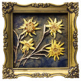 Aged edelweiss Stock Images