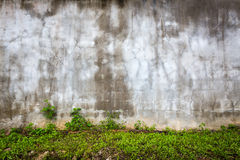 Aged empty wall with green grass Stock Photos