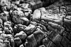 Aged end grain Royalty Free Stock Image