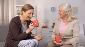 Aged female friends drinking tea and chatting sitting in comfortable living room stock video footage