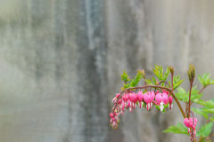 Aged gray blurred background with a delicate sprig of flower dicentra in the corner. Greeting card with place for inscription Royalty Free Stock Images