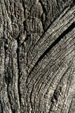 Aged gray wood macro texture for background Royalty Free Stock Photo