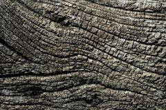 Aged gray wood macro texture for background Stock Photo