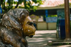 Aged lion& x27;s head at the park royalty free stock image