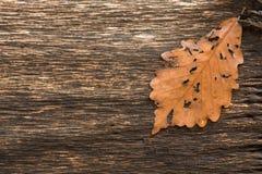 Aged Oak Stock Photos