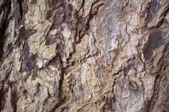 Aged oak tree bark closeup texture photo. Rustic tree trunk closeup. Stock Photo