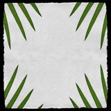 Aged paper with green palm leafs Royalty Free Stock Photos