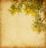Aged paper texture with  branch of autumn leaves. Stock Photo