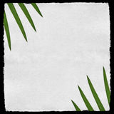 Aged paper texture with palm leafs Royalty Free Stock Photography