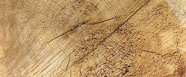 Aged Pine Wood Grain Wide Texture Close-up Stock Image