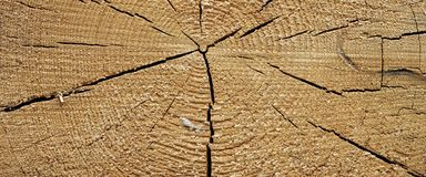 Aged Pine Wood Grain Wide Texture Close-up Stock Photography