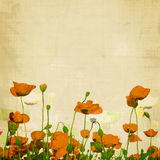 Aged poppies Royalty Free Stock Photography