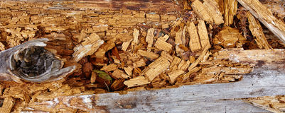 Aged rotten wood Stock Photography