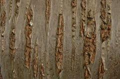 Aged scratch timber background Royalty Free Stock Image