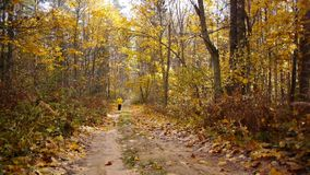 Aged sporty woman jog in autumn forest stock footage