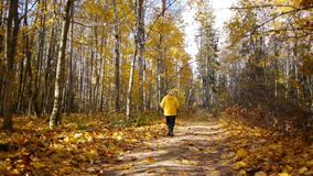 Aged sporty woman jog in autumn forest stock video