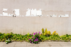 Aged street wall Royalty Free Stock Images