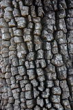 Aged textured bark royalty free stock image