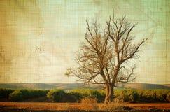 Aged tree vector illustration