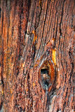 Aged tree trunk surface background Stock Photography