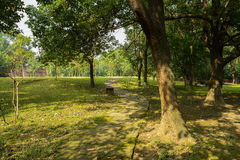 Aged trees by shaded path on sunny day Royalty Free Stock Photo