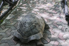 Aged Turtle stock photos