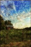 Aged vineyard photo stock photography