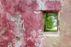 Aged weathered pink wall window beech forest Royalty Free Stock Photo