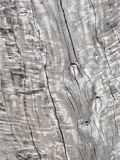 Aged Weathered Wood Royalty Free Stock Photography