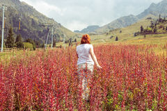 Aged woman are going through red plants to the mountains, Tien S Stock Photos