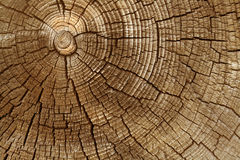 Aged wood cut Stock Image