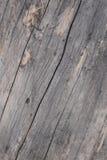 Aged wood Royalty Free Stock Photos