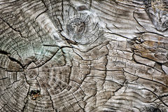 Aged Wood With Knots 1. Detailed close up of a the surface of old wood planking. A great texture image for a background or overlay stock photo