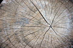Aged wood of patterns. Stock Photography
