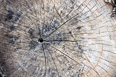 Aged wood of patterns. Royalty Free Stock Photography