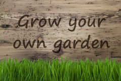Aged Wooden Background, Gras, Grow Your Own Garden Stock Images