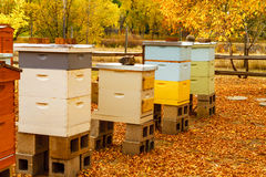 Aged Wooden Bee Hives in Autumn Setting Stock Photos
