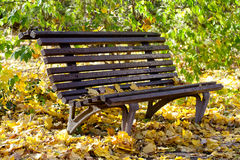 Aged wooden bench in autumn park sunny day. Colorful yellow leaves background. Fall concept Royalty Free Stock Images