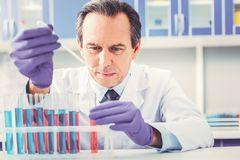 Ageing chemist placing test tubes in order. Ageing chemist. Ageing famous chemist feeling very occupied while placing small tall test tubes in order on the royalty free stock photography