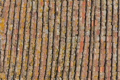 Ageing rooftiles in Siena Italy Royalty Free Stock Image