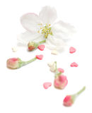 Agencement avec des coeurs roses et un bourgeon Image libre de droits