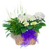 Agencement de fleur de Hydrangea et de lis de paix Photographie stock libre de droits