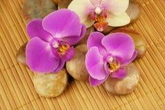 Agencement oriental d'orchidée Photo libre de droits
