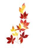 Agencement soigné des lames d'automne image libre de droits