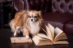 Agenda, boek, kleine hond Stock Foto