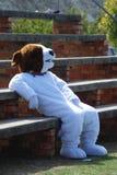 Agente divertido del perro Imagen de archivo libre de regalías