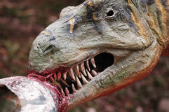 Aggressive animal. He likes the flesh Stock Image